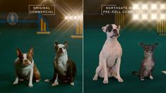 Agency: Circus Client Northgate supermarket