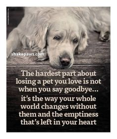 lost of a pet dogs rainbow bridge Dog Loss Quotes, Dog Quotes Love, Losing A Dog Quotes, Sad Quotes, Pet Loss Poems, Lost Dog Quotes, A Girl And Her Dog Quotes, Quotes About Dogs, Quotes About Grief