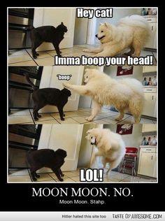 lolololol Moon Moon, just stop
