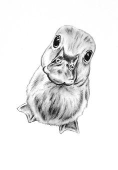 ORIGINAL Charcoal Duckling Drawing 5x7 Duckling by JaclynsStudio