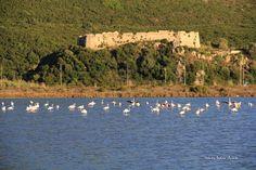 Παρέλαση των flamingos μπροστά στο κάστρο του Γρίβα. 07/10/16.