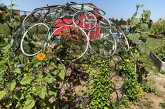 Is Your Garden A Champ? Entries Open For Chicago Gardening Awards — Pretty Plants Not Necessarily Required – Block Club Chicago Urban Agriculture, Urban Farming, Benefits Of Gardening, Concrete Driveways, City Limits, Native Plants, Habitats, Awards, Chicago