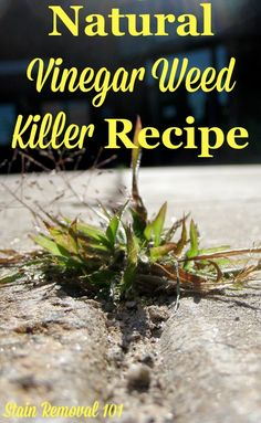 Natural vinegar weed killer recipe for use on isolated weeds such as those in cracks or on the edge of the driveway {on Stain Removal 101}