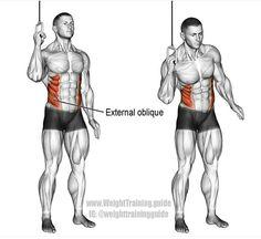Entrenamiento deportivo Oblucios, Musculo serrano