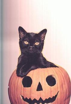 Eeek I love Halloween so much <3
