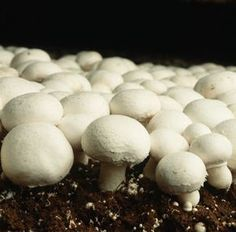 Button Mushroom Grow Kit - Produce your own Tasty Crops at Home - Fungi & Mushrooms - Veg & Kitchen Garden - Garden Plants Growing Mushrooms At Home, Garden Mushrooms, Edible Mushrooms, Stuffed Mushrooms, Herb Garden, Garden Plants, Culture Champignon, Mushroom Grow Kit, Brown Mushroom