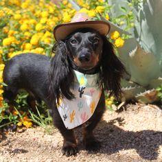 "Cactus Dog Bandana Mint Yellow and White ""The Chewie"""