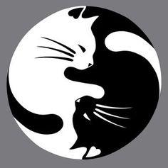 Original cat tattoo in various styles - 39 creative ideas ♡ tattoo-chat-model-symbol-yin-yang-black-white. Tattoo Chat, Cat Embroidery, Lucky Cat Tattoo, White And Black Cat, Yin Yang Tattoos, Black Cat Tattoos, Tattoo Templates, Emoji Templates