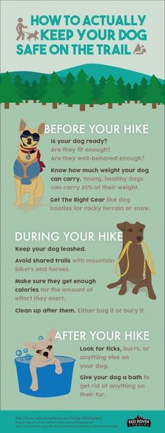 How to Keep You Dog Safe on the Trail | Red Rover Camping  http://www.redrovercamping.com/hiking-with-dog-tips/