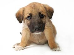 Bella, Bentley, Molly, and Max ... again? Top puppy names of 2012 - Pets & Animals - TODAY.com