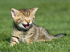 baby-kittens-baby-animals-19797164-1600-1200.jpg (1600×1200)