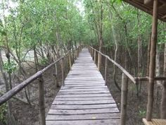 Bakhawan Mangrove park of Kalibo Bus Terminal, Tourist Spots, Philippines, Walking, Island, Park, Places, Walks, Islands