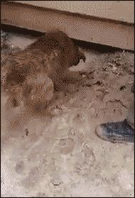 Momma dog saves her puppies from drowning after rain. [video] https://www.youtube.com/watch?v=2ESNR3OGDzE