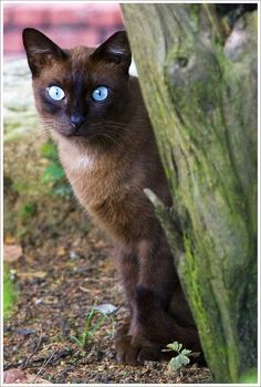 Blue eyes....