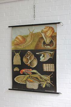 Vintage+Mid+Century+German+Educational+Chart+Snail