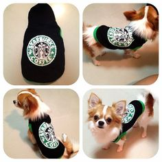 This dog is wearing a Starbuck Sweater (for dogd only)