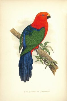 GREENE, William. Parrots in Captivity. George Bell and Sons, 1884-87. #parrots #ornithology #zoo