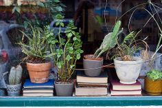 Window books plants love