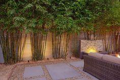 uplighting bamboo landscape - Google Search