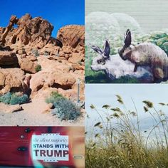 The State of Things: A Nevada Photostream - Posted March 22, 2016 #LasVegas #Vegas #LAS #LV #Nevada #NV #California #CA #Travel #RoadTrip #ThingsToDo #Trip #TripItinerary #Holiday #Vacation #DeathValley #SuperBloom #ValleyOfFire #TheStrip #Food #DowntownGrandLV #Nature #Wetlands #Graffiti