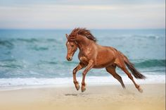 5 Magnificent Images of Horses