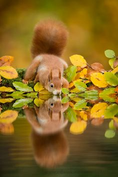 Patience, Practice Make For Incredible Wildlife Imagery by Edwin Kats