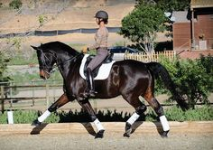 In dressage, rider position and balance affect everything—the horse's rhythm and tempo, his longitudinal and lateral balance and his willingness to go forward and come back. Being balanced in the