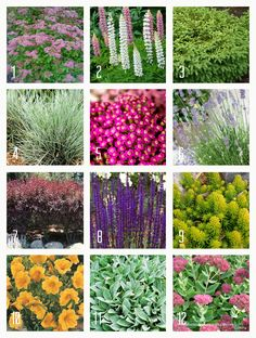 A few hearty, drought resistant perennials that will grow in zone 4.