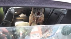 MHS Investigates a Dog Locked in a Car in the Extreme Summer Heat