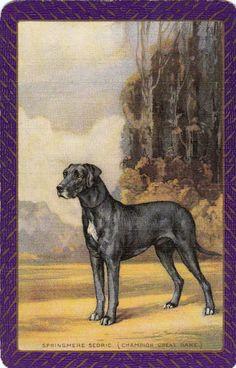 1 SWAP PLAYING CARD VINTAGE ENGLISH NN GREAT DANE DOG SPRINGMERE SEDRIC