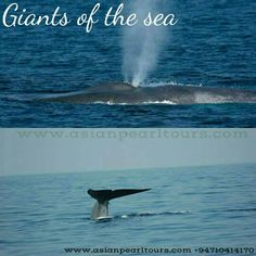 Giants of the see. ...