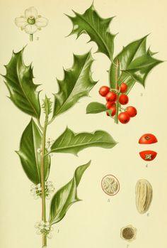 Todo para tu jardín: Plantas medicinales, útiles y bellas
