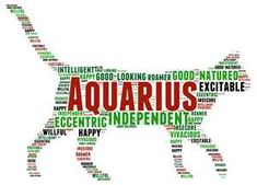 AQUARIUS JANUARY 20– FEBRUARY 18 #pet #zodiac #aquarius