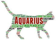 AQUARIUS JANUARY 20– FEBRUARY 18 #pet #zodiac #aquarius