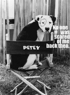 Yes that's Petey from Little Rascals. Yes he was a Pit Bull. No, he was not vicious. That's just society lying to you like they did about Dobie's, German Shephards and Rottweillers. Whats next, Bull Mastiffs?