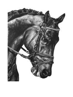 57a887f07877 Equestrian art pencil drawing. Horse riding print. 10