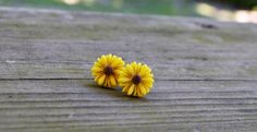 Sunflower Earrings - Autumn - Fall - Yellow and Brown - Gifts Under 25 on Etsy, $8.00