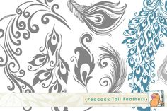 Check out Peacock Tail Feathers by FishScraps on Creative Market