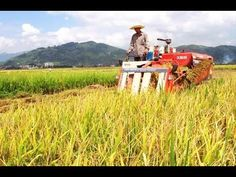 China to modernize, restructure agriculture sector - YouTube