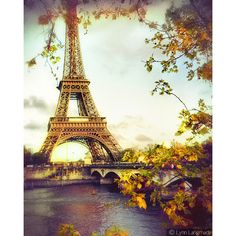 Paris Photographs - photograph of the Eiffel Tower in gold, Paris wall... ($15) ❤ liked on Polyvore featuring home, home decor, wall art, backgrounds, paris, pictures, fotos, autumn, black and white framed wall art and yellow wall art