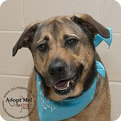 I am at a high kill shelter in Troy, OH - Shepherd (Unknown Type) Mix. Meet Gunner, a dog for adoption. http://www.adoptapet.com/pet/15215884-troy-ohio-shepherd-unknown-type-mix