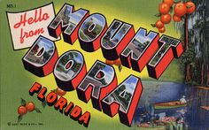 ahhh the high school years spent in Mt. Dora Florida Old Florida, Vintage Florida, Florida Travel, Photo Postcards, Vintage Postcards, Mount Dora Florida, Cool Typography, Large Letters, Vintage Travel Posters