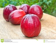 Malay Apple Stock Photos, Images, & Pictures – (193 Images)