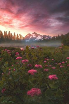 Wild Flowers, Blue Flowers, World Cup 2018, Beautiful World, Alaska, Sunrise, Clouds, Sky, Mountains