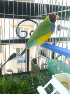 """Great idea for anyone who uses cage grates! From the group """"Gouldian's Australia."""" on Facebook"""