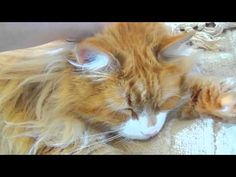 The Best Cat's Purr Ever!