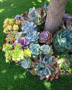 32 Nice Succulents Garden Ideas For Outdoor Decor - Succulents are perfect plants for dry gardens and are easy to root and grow. Once you learn how easy it is to propagate succulent plants. Succulent Landscaping, Succulent Gardening, Cacti And Succulents, Front Yard Landscaping, Planting Succulents, Planting Flowers, Landscaping Ideas, Succulent Garden Ideas, Mulch Landscaping