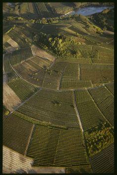 Vigneti - Piemonte