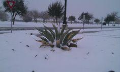 Odessa texas 2012 snow!