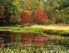 Autumn color by Lida Rose, via Flickr